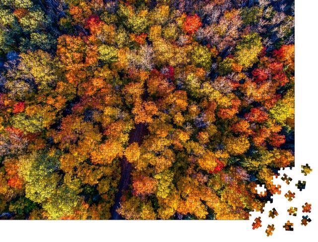 """Puzzle 1000 Teile """"Wunderschöner Herbstwald aus der Vogelperspektive"""""""