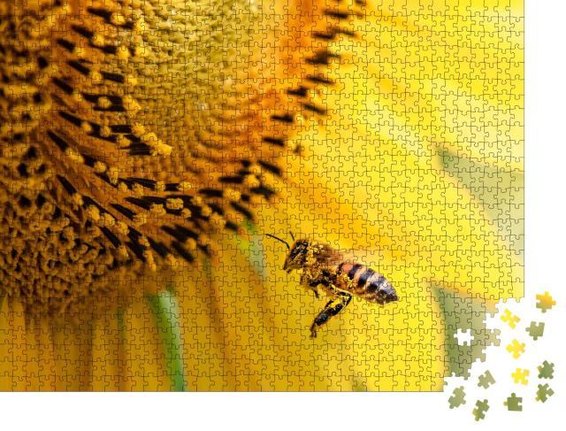 """Puzzle 1000 Teile """"Honigbiene bestäubt Sonnenblumenpflanze"""""""