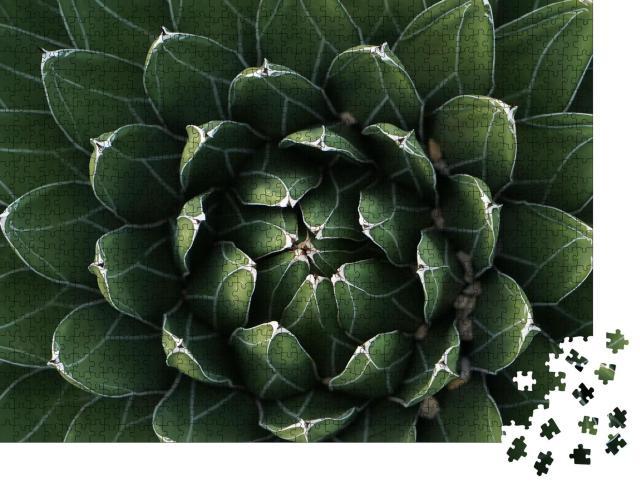 """Puzzle 1000 Teile """"Wunderschön symmetrischer Kaktus in Nahaufnahme"""""""
