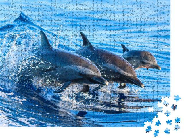 """Puzzle 1000 Teile """"Familie von Fleckendelfinen springt aus dem klaren blauen Wasser vor Hawaii"""""""