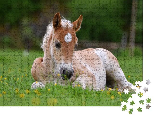 """Puzzle 1000 Teile """"Wunderschönes Fohlen  im Gras"""""""