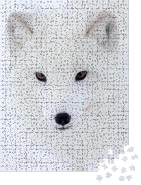 """Puzzle 1000 Teile """"Der stechende Blick eines Polarfuchses"""""""