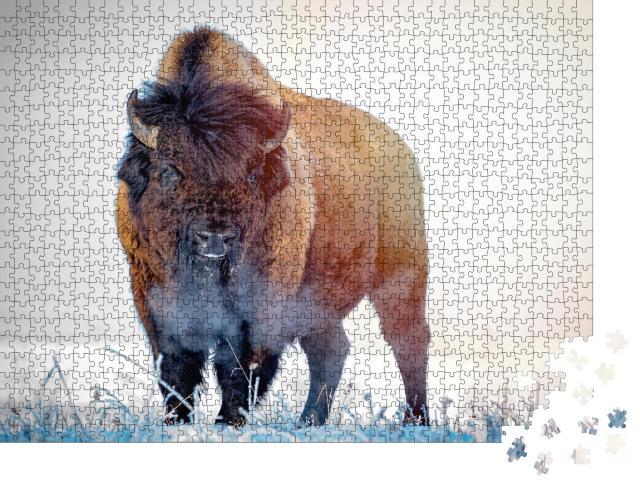 """Puzzle 1000 Teile """"Präriewisent an einem frostigen Wintermorgen"""""""