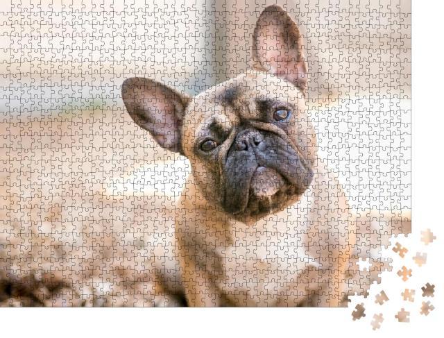 """Puzzle 1000 Teile """"Eine süße rehbraune Französische Bulldogge"""""""