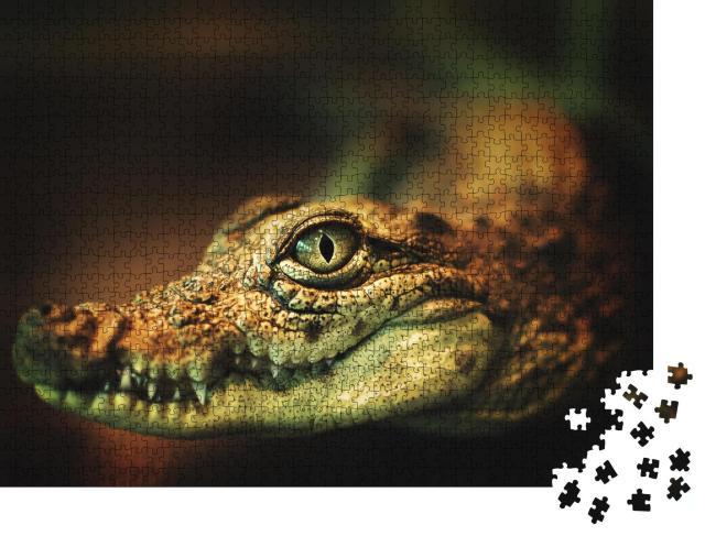 """Puzzle 1000 Teile """"Krokodil zeigt seine Zähne und blickt zur Kamera"""""""