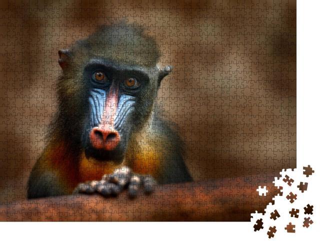 """Puzzle 1000 Teile """"Mandrill: Detailporträt eines Affen aus Zentralafrika"""""""