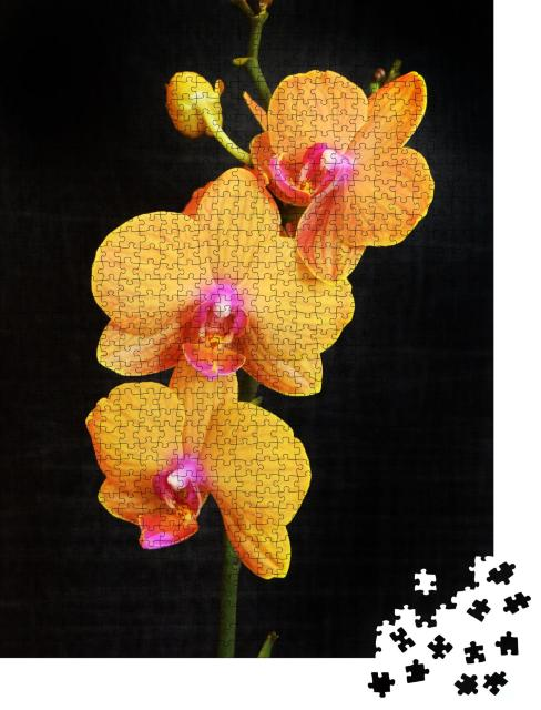 "Puzzle 1000 Teile ""Orangefarbene Phalaenopsis-Orchidee mit satt blühenden Blüten"""