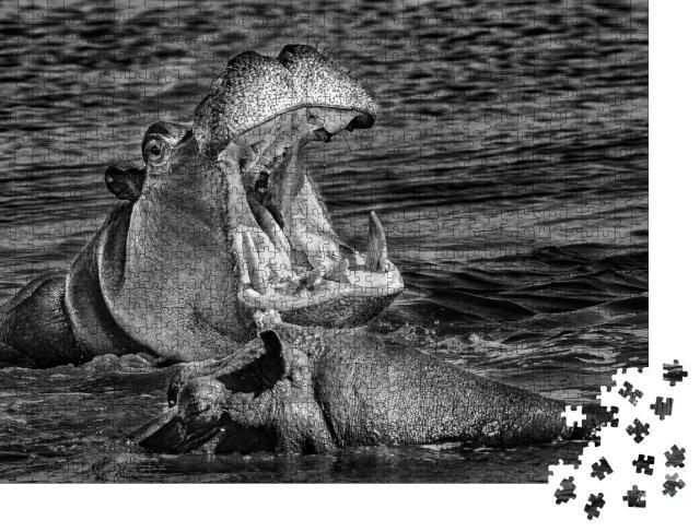 """Puzzle 1000 Teile """"Nilpferd mit weit aufgerissenem Maul, Okavango-Delta, Botswana"""""""