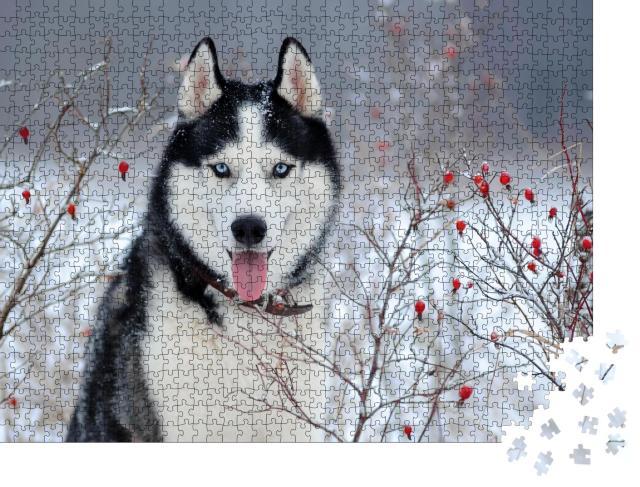 """Puzzle 1000 Teile """"Sibirischer Husky mit blauen Augen im Winter"""""""