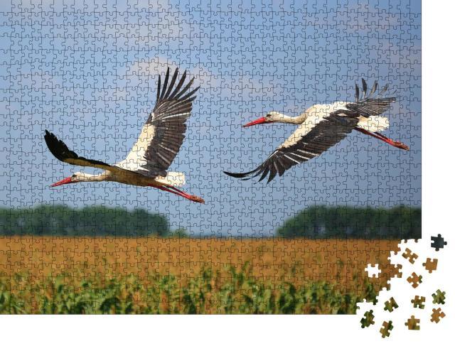 """Puzzle 1000 Teile """"Zwei Störche fliegen über ein Feld"""""""