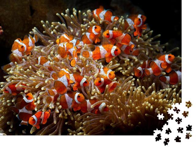 """Puzzle 1000 Teile """"Niedliche Anemonenfische spielen auf dem Korallenriff"""""""