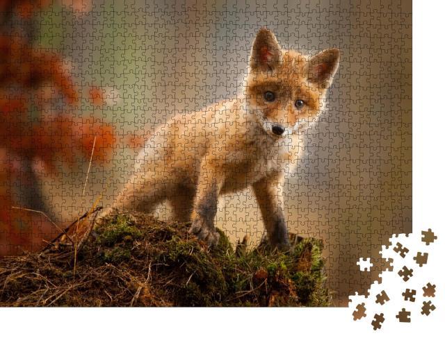 """Puzzle 1000 Teile """"Ein junger Fuchs"""""""