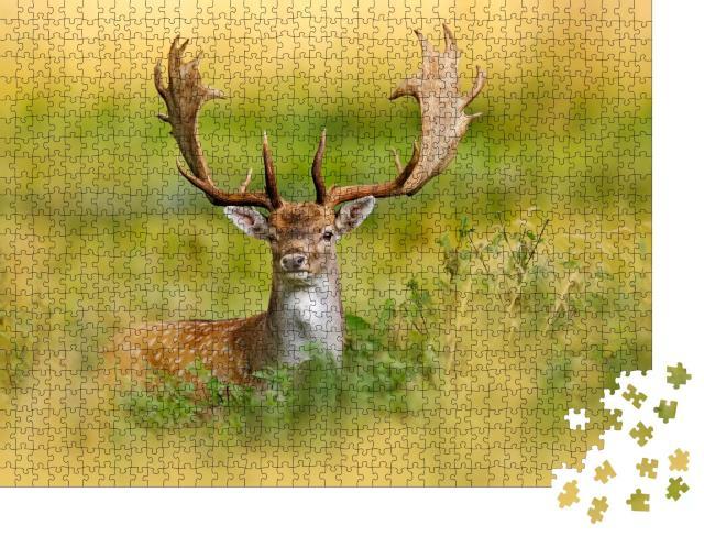 """Puzzle 1000 Teile """"Majestätischer Damhirsch im Herbstwald, Dyrehave, Dänemark"""""""