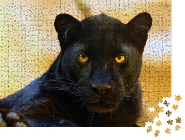 """Puzzle 1000 Teile """"Auge in Auge mit einem schwarzen Panther"""""""