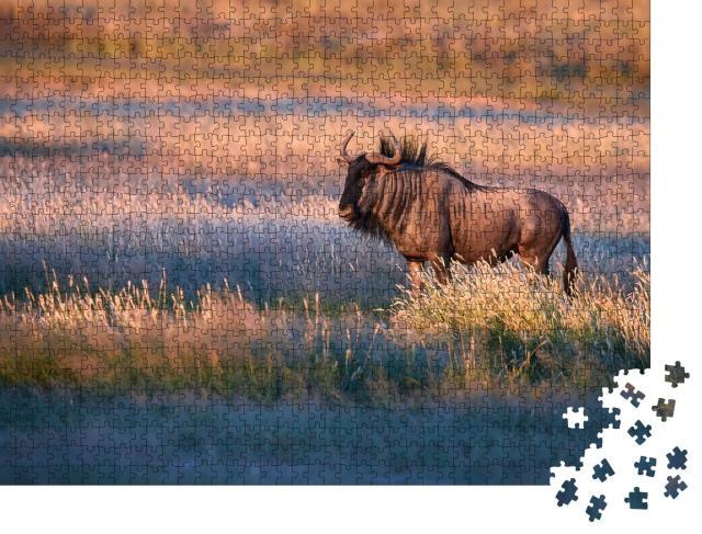 """Puzzle 1000 Teile """"Streifengnu im Abendlicht der Kalahari-Savanne"""""""
