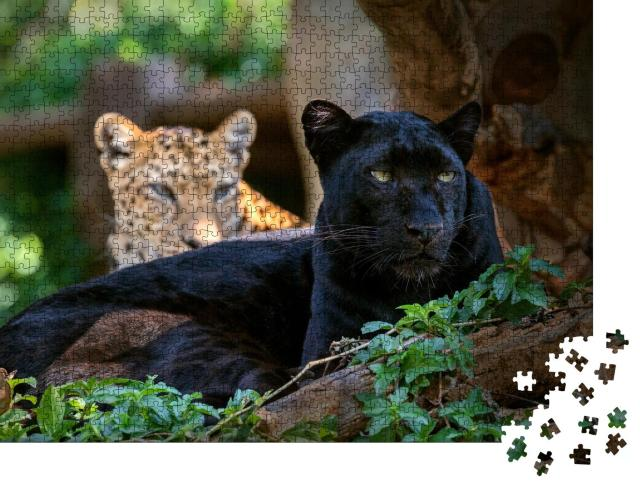 """Puzzle 1000 Teile """"Leopard oder Panther"""""""