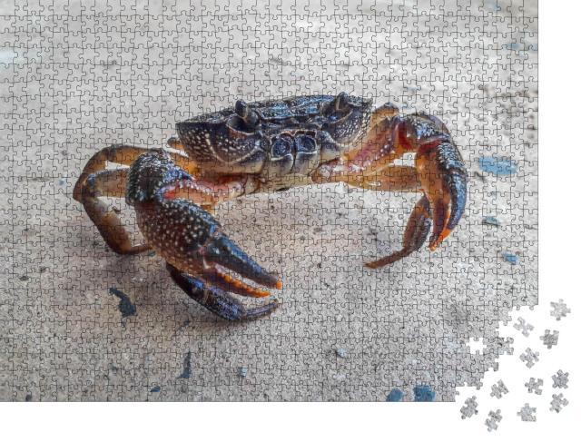 """Puzzle 1000 Teile """"Die schwarze Krabbe"""""""