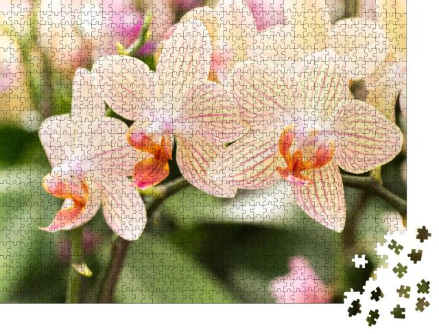 """Puzzle 1000 Teile """"Gestreifte Orchideenblüten in ihrer vollen Pracht"""""""