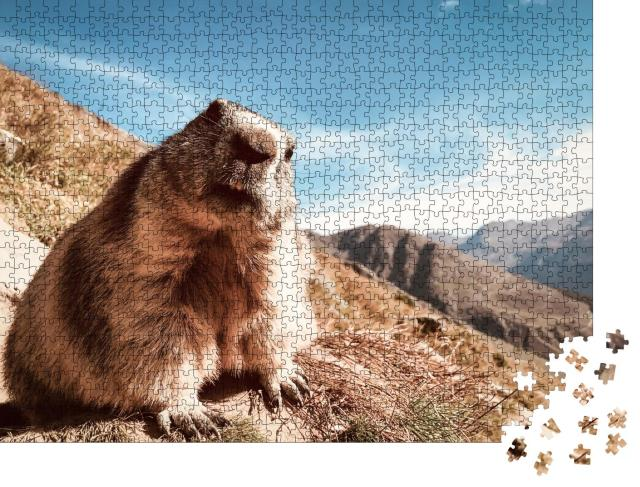 "Puzzle 1000 Teile ""Murmeltier mit fragendem Blick"""