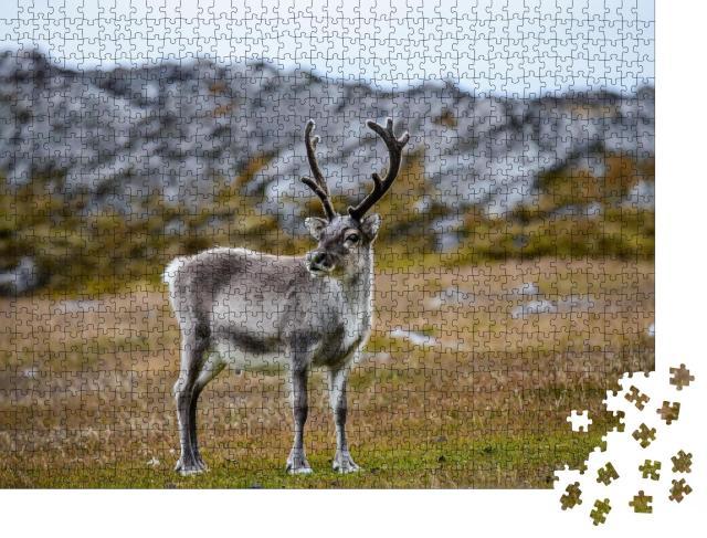 """Puzzle 1000 Teile """"Rentier in seinem natürlichen Lebensraum"""""""