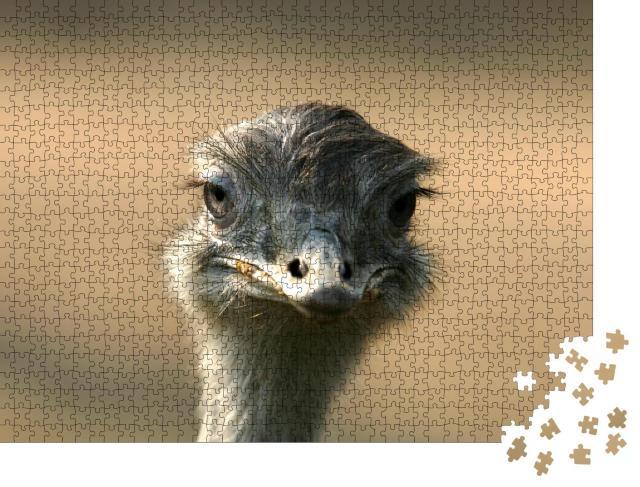 """Puzzle 1000 Teile """"Porträt vom Straußenkopf, Blick in die Kamera"""""""