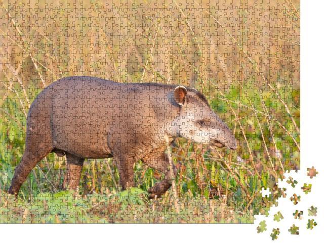 """Puzzle 1000 Teile """"Tapir, Flachlandtapir im brasilianischen Dschungel"""""""