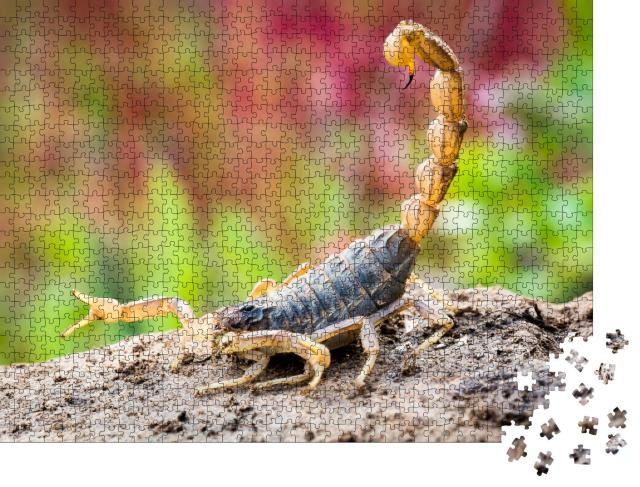 """Puzzle 1000 Teile """"Skorpion in Angriffsposition"""""""