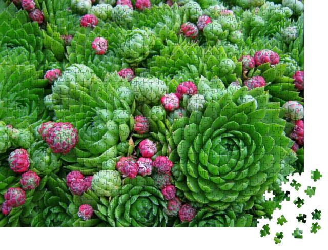 """Puzzle 1000 Teile """"Wunderschöne Sukkulenten, saftig-grüne Pflanzen mit kleinen Blüten"""""""