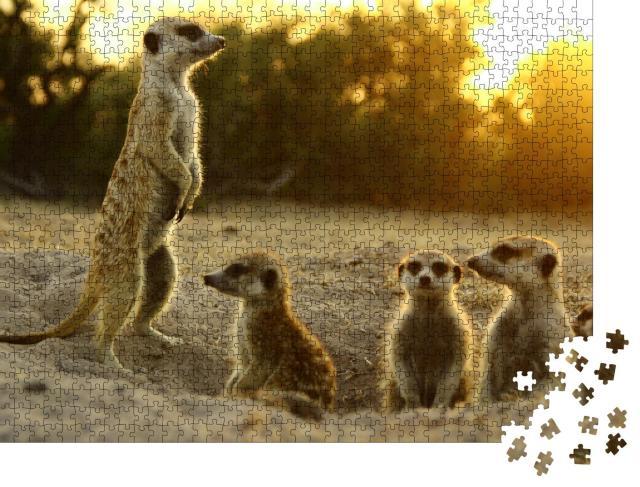 """Puzzle 1000 Teile """"Erdmännchen in ihrem natürlichen Lebensraum"""""""