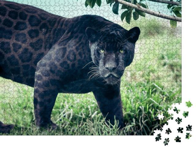 """Puzzle 1000 Teile """"Schwarzer Panther, Wildkatze mit starkem Blick"""""""