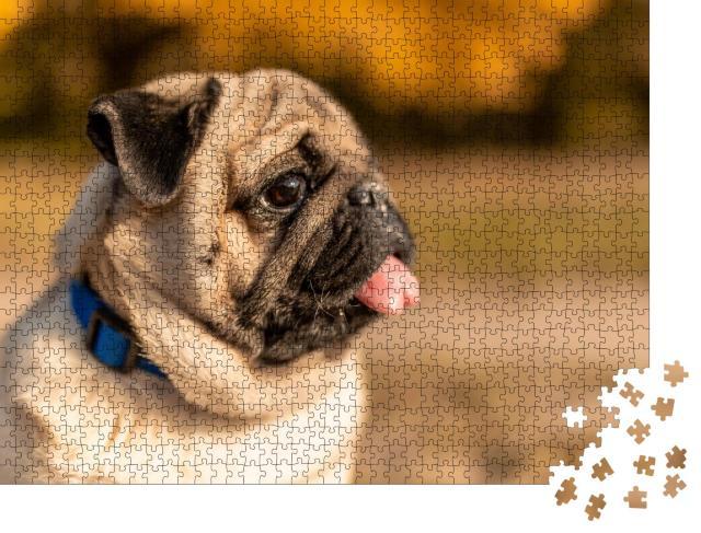 """Puzzle 1000 Teile """"Seiten-Porträt eines Mopses"""""""