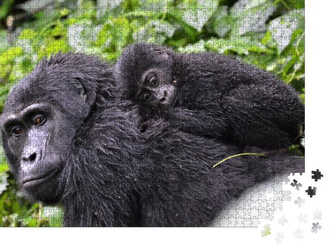 """Puzzle 1000 Teile """"Gorillababy liegt auf dem Rücken der Mutter im Bwindi Impenetrable Forest"""""""