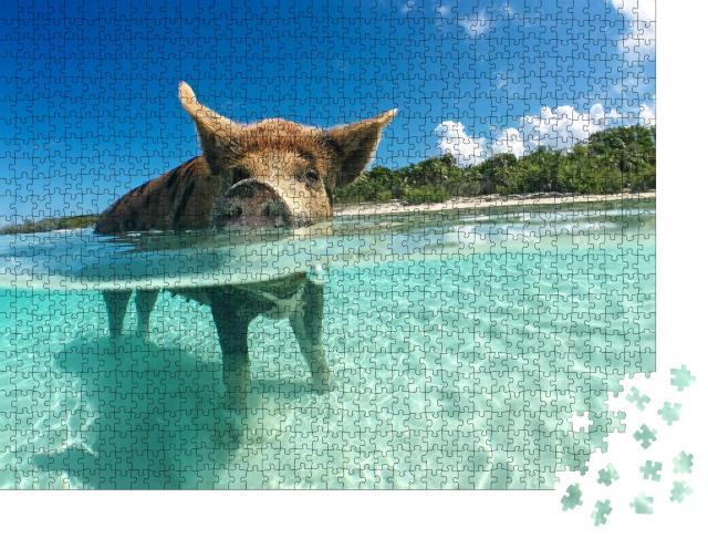 """Puzzle 1000 Teile """"Wasserbegeistertes Wildschwein auf den Bahamas, Karibik"""""""