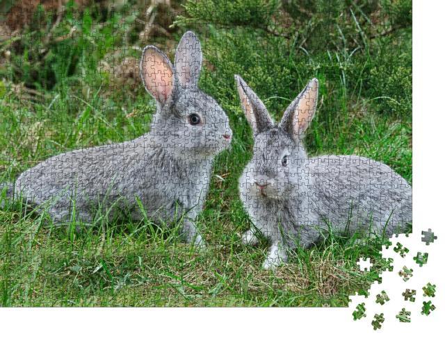 """Puzzle 1000 Teile """"Flauschige graue Kaninchen auf dem grünen Gras"""""""