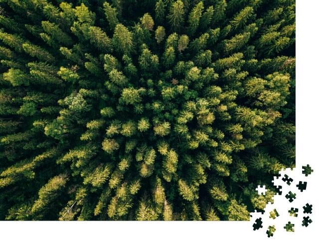 """Puzzle 1000 Teile """"Vogelperspektive auf einen Nadelwald"""""""