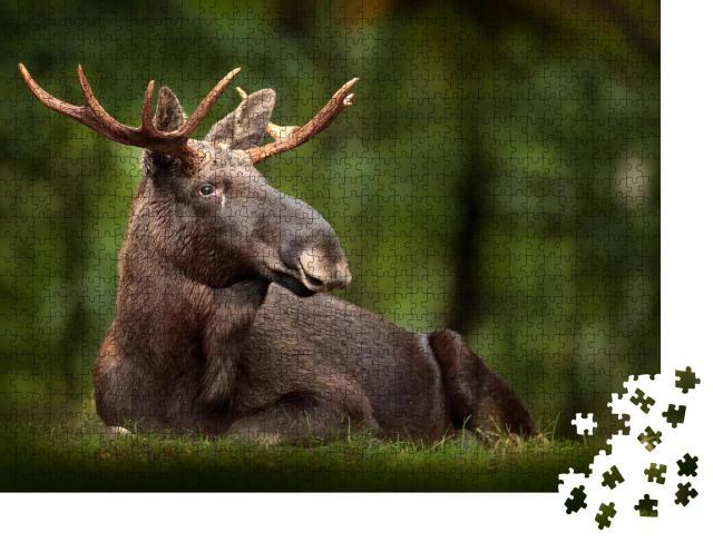 """Puzzle 1000 Teile """"Elch: schönes Tier in der Natur"""""""
