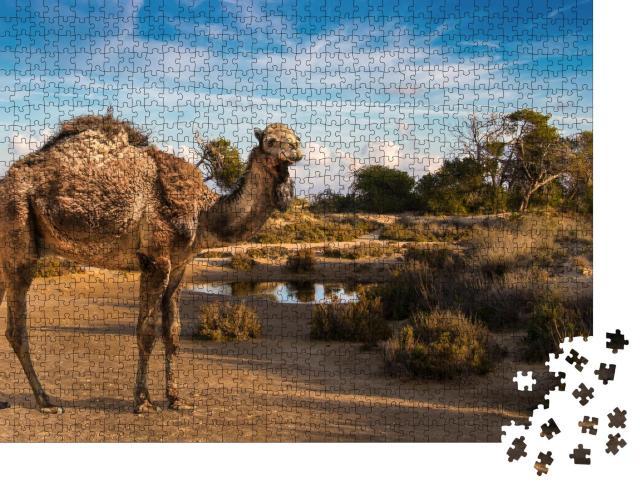 """Puzzle 1000 Teile """"Ein zotteliges Dromedar an einem Wasserloch"""""""