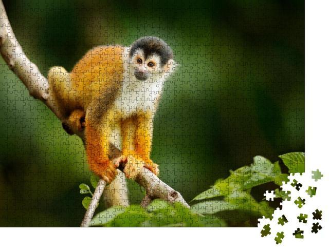 """Puzzle 1000 Teile """"Totenkopfäffchen, Saimiri oerstedii, auf einem Baumstamm, Costa Rica"""""""