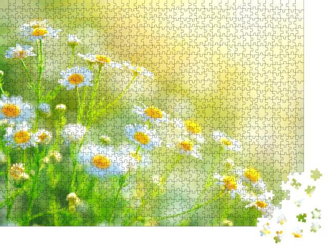 """Puzzle 1000 Teile """"Kamille auf dem Feld"""""""