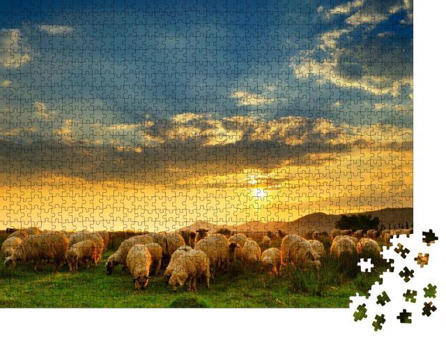 """Puzzle 1000 Teile """"Eine Schafherde weidet auf einem Hügel bei Sonnenuntergang"""""""