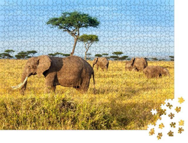"""Puzzle 1000 Teile """"Afrikanische Elefanten im Maasai Mara National Reserve, Kenia"""""""