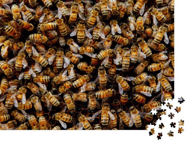 """Puzzle 1000 Teile """"Ein schwärmendes Bienenvolk versammelt sich um seine Königin"""""""