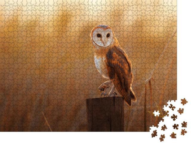 """Puzzle 1000 Teile """"Schöne Schleiereule auf einem Baumstumpf"""""""
