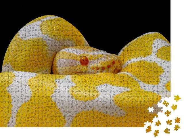 """Puzzle 1000 Teile """"Weiß-gelbe Kugelpython, um sich selbst geschlungen"""""""