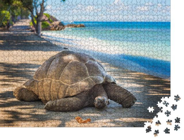 """Puzzle 1000 Teile """"Seychellen-Riesenschildkröte"""""""