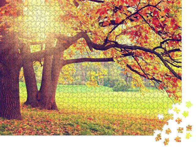 """Puzzle 1000 Teile """"Herbstlandschaft mit alten Bäumen"""""""