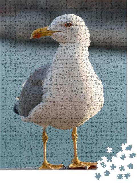 """Puzzle 1000 Teile """"Grau-weiß gefiederte Seemöwe"""""""