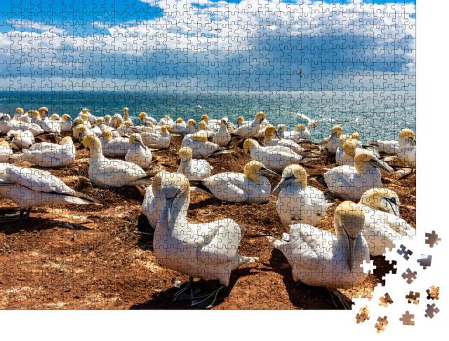 """Puzzle 1000 Teile """"Ruhender Vogelschwarm auf der Insel Helgoland, Deutschland"""""""