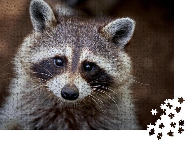 """Puzzle 1000 Teile """"Nahaufnahme eines sehr niedlichen Waschbären"""""""