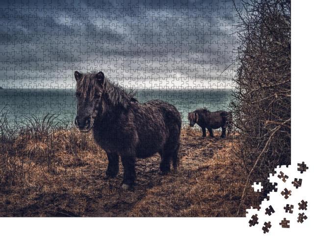 """Puzzle 1000 Teile """"Shetlandponys an der Küste von Cornwall"""""""